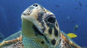 У некоторых черепах глаза находятся по бокам, но мозг обрабатывает зрительную информацию так, как если бы глаза у них смотрели вперед